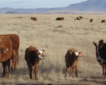 Cattle Management Can Improve Habitat…and Prevent Global Warming