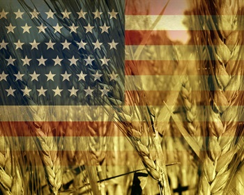 Pulse: Farmers Receiving Subsidies Should Not be Allowed to Sell to the Export Market
