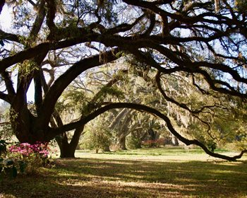Soul-inspiring Lowcountry Plantation