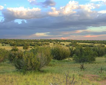 Stake Your Claim: Scenic High Country Ranch Parcels