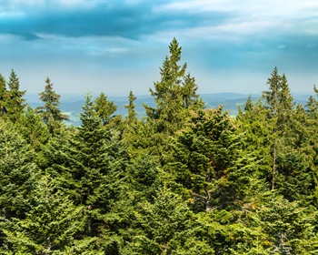 Timberland Ownership and Management in North America: 2016 Update
