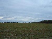 117 Acres Of Farmland