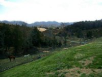 13 Acre Mini-farm