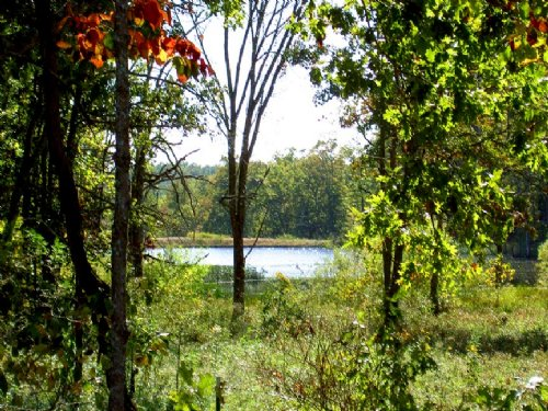 Secluded Ozark Hills Land : Cabool : Texas County : Missouri