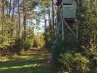 Dawson Tract- Turn Key Hunt Camp : Allendale : Allendale County : South Carolina