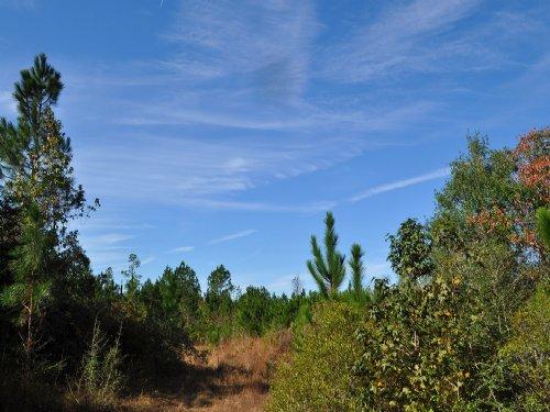360 Acres Cr 725 : Buna : Jasper County : Texas