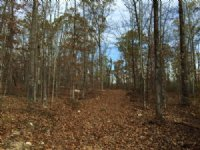 61.21 +/- Wooded Acres