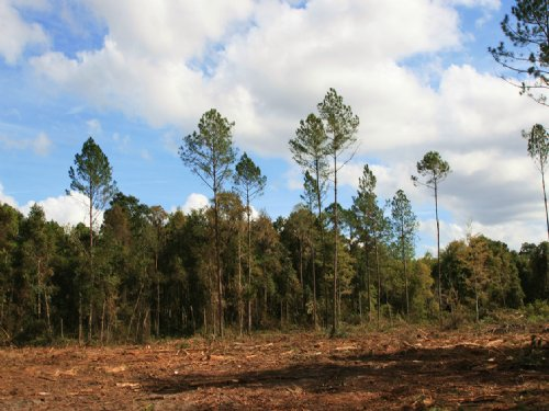 33.61 Acres Near Wellborn : Wellborn : Suwannee County : Florida