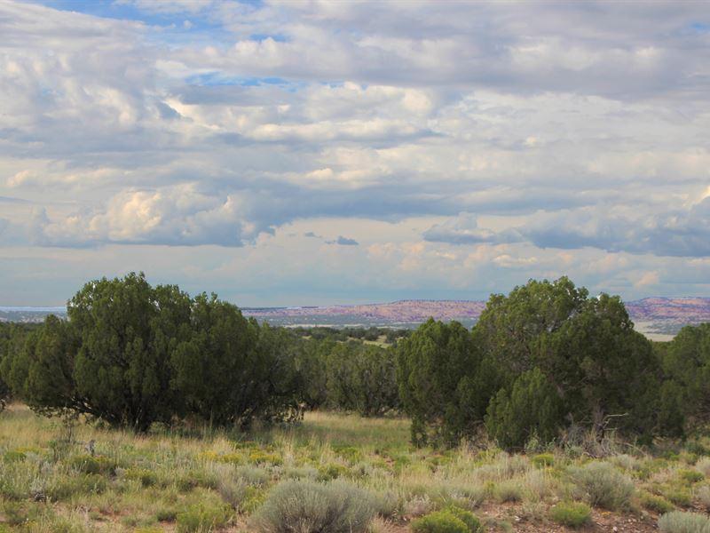 40 Acre Hilltop Wilderness Ranch : Saint Johns : Apache County : Arizona
