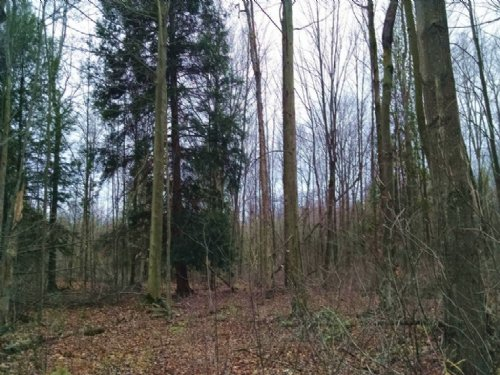 30 Acre Hunting Parcel : Muskegon : Michigan