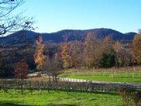 Horse Farm / Vineyard