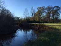 133.4 +/- Wooded Acres, Buchanan