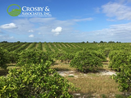 465 Acre Producing Citrus Grove : Lake Placid : Highlands County : Florida