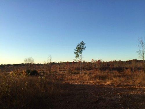 50 +/- Acres, Buchanan : Buchanan : Haralson County : Georgia