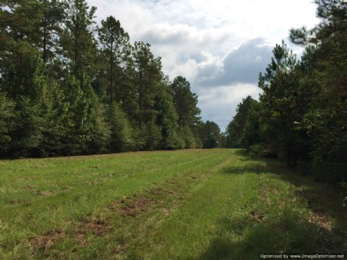 213 Acres Rare Find : Summit : Pike County : Mississippi