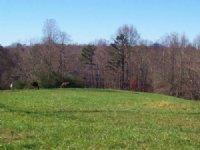 Farmland / Investment