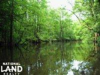Livingston Creek Hunting Land