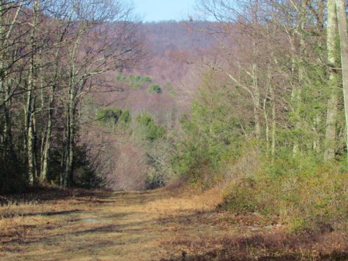 Secluded 10 Acres In Sweet Valley : Sweet Valley : Luzerne County : Pennsylvania