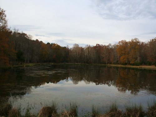 Sportsman's Paradise 70+ Acres : Lincolnton : Lincoln County : Georgia