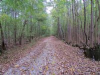 Sandy Creek Tract : Bishopville : Lee County : South Carolina