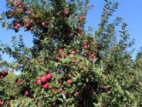 Variety Fruit Farm On 86 Acres