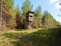 84.00 Acres Hunting Land, Timber