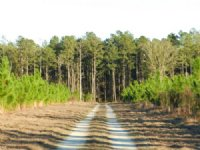 Fish Pond Tract : Estill : Hampton County : South Carolina