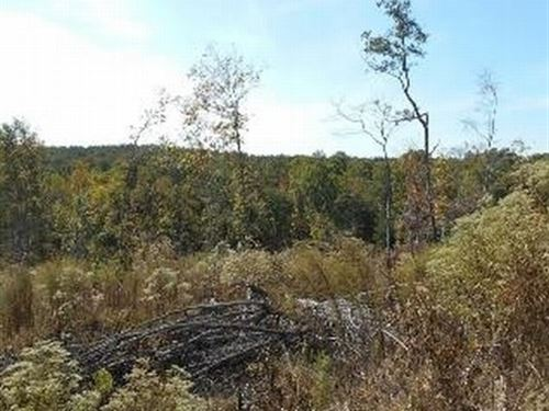 173.9 Acres In Montgomery County In : Vaiden : Montgomery County : Mississippi