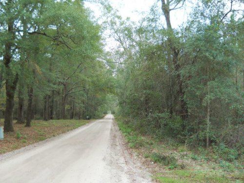 123 Acres Of Planted Pines : Live Oak : Suwannee County : Florida