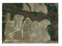 Youngblood Farm 202.8 Acres