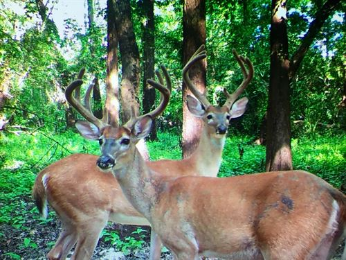 Reduced Hunting Timber Land Bossier : Haughton : Bossier Parish : Louisiana