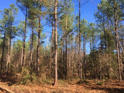Beekman, Llc - Banzet-echols Tract : Warrenton : Warren County : North Carolina