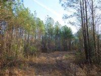 Beekman, Llc - St. Regis Tract : Louisburg : Franklin County : North Carolina