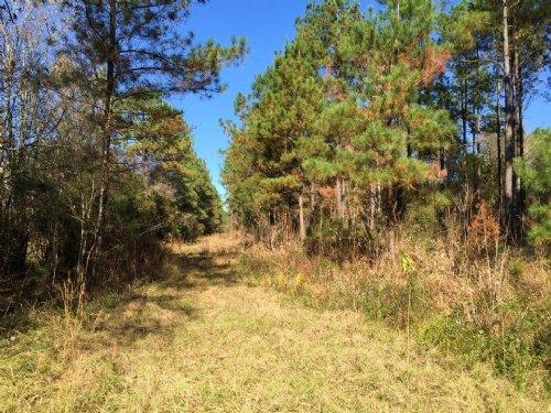 119 Acre Hunting Paradise : Nahunta : Brantley County : Georgia