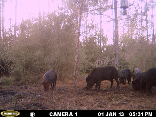 20 Acres For Hunting : Perry : Taylor County : Florida