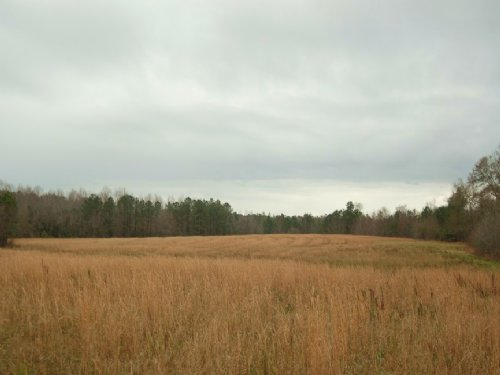 90 Ac With A Little Of Everything : Midway : Bullock County : Alabama