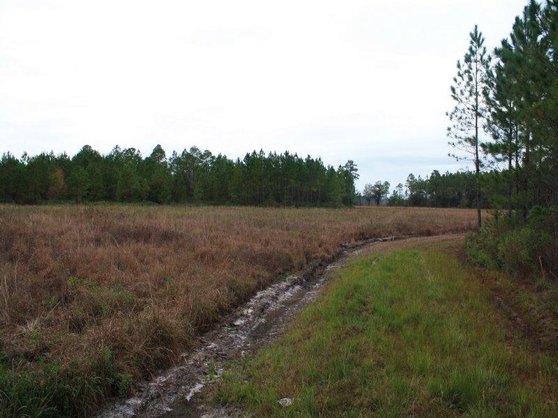 b533cffa0084 Jennings Timberland   Farm for Sale   Jennings   Hamilton County ...