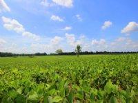 222 Acre Row Crop Farm