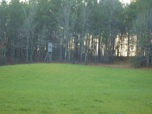 220 Acres With Lake House : Rockford : Coosa County : Alabama