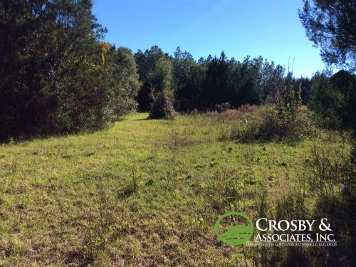 17+/- Ac Vacant Residential Land : Sorrento : Lake County : Florida