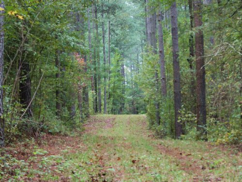 160 Ac - Great Hunting Tract : Greensboro : Greene County : Georgia