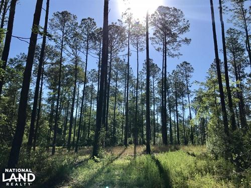 Whitehouse Fork Hunting And Timber : Bay Minette : Baldwin County : Alabama