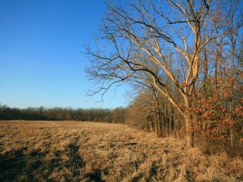 80 Acres : Vandalia : Audrain County : Missouri