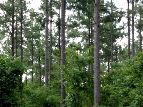 574 Acres For Sale : Grenada : Mississippi