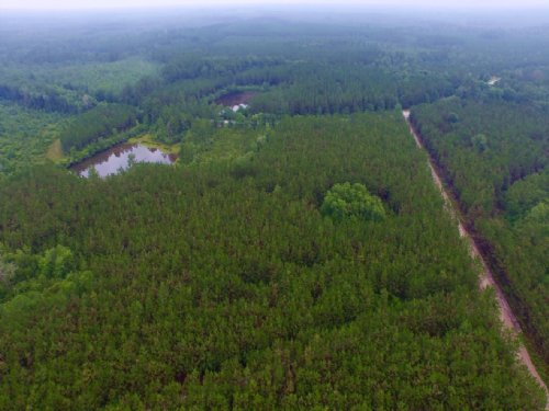 465 Acre Fruitland Plantation : Homerville : Clinch County : Georgia