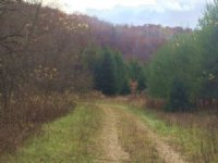 Great Tract Of Land W Small Creek