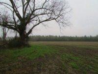 Roper Woods Farm Tract