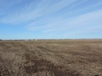 75 +/- Acre Auction