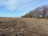 59 Acre +/-  Auction