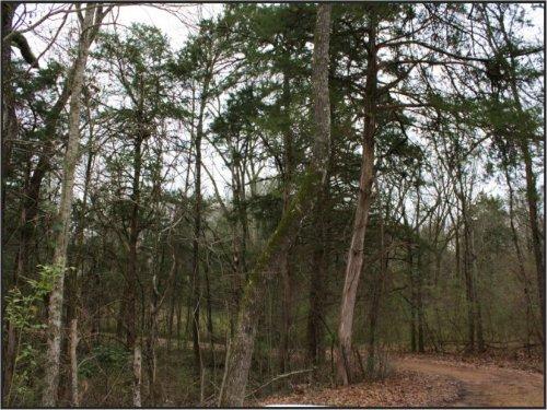 8.8 Acres In Oktibbeha County : Starkville : Oktibbeha County : Mississippi